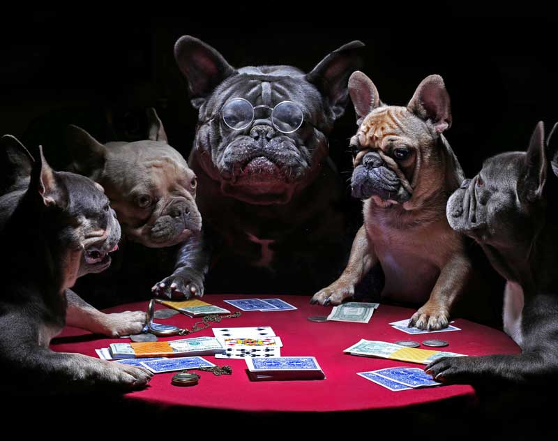 Shop CBD For Dogs And Cats In Las Vegas Dogs Playing Poker