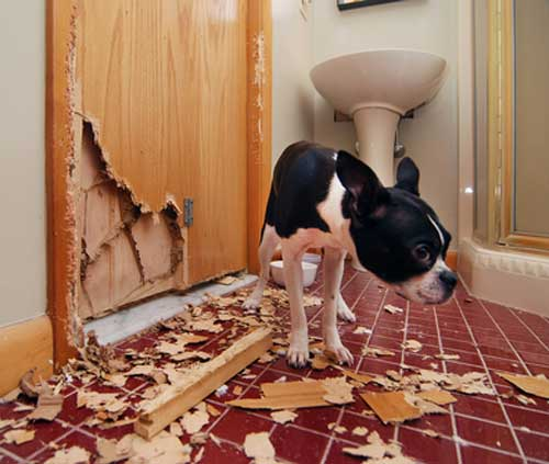 Panic Attack Symptoms In Dogs: