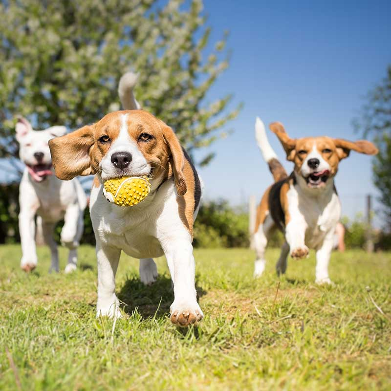 Shop CBD For Dogs And Cats In Anaheim Dog Park