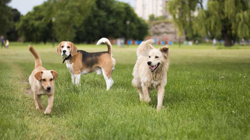 Shop CBD For Dogs And Cats In Las Vegas Kennel