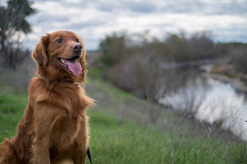 Shop CBD For Dogs And Cats In Sacramento River Parkway Trail