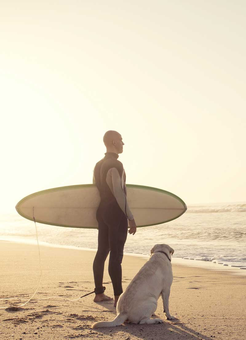 Shop CBD For Dogs And Cats In San Diego Surfing
