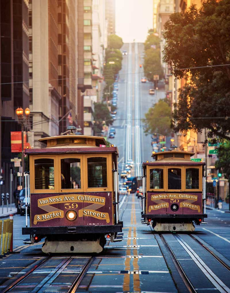 Shop CBD For Dogs And Cats In San Francisco Street Cars