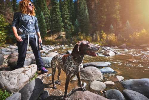 Shop CBD For Dogs And Cats In Aurora Colorado Hiking