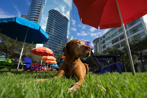 Shop CBD For Dogs And Cats In Dallas Texas Dog Park