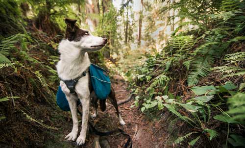 Shop CBD For Dogs And Cats In Fresno Red Woods Forest