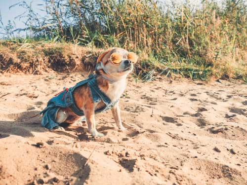 Shop CBD Oil For Dogs And Cats In Portland Beach
