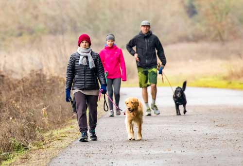 Shop CBD Oil For Dogs And Cats In Salem Dog Park