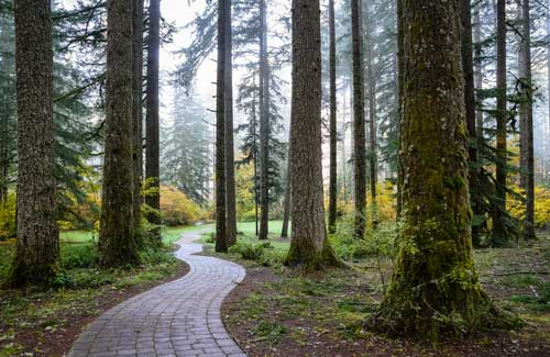 Shop CBD Oil For Dogs And Cats In Salem Silver Falls Park