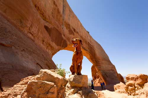 Shop CBD Oil For Dogs And Cats In Salt Lake City Mountains
