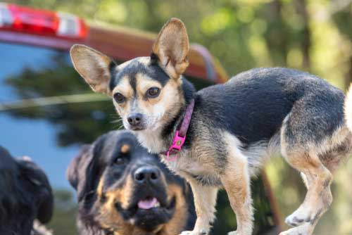 Shop CBD Oil For Dogs And Cats In Tacoma Truck