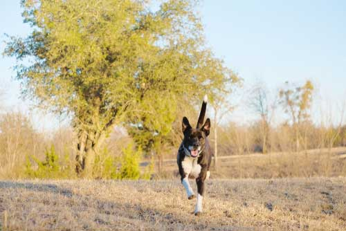 Shop CBD For Dogs And Cats In Arlington Dog Park