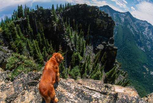 Shop CBD For Dogs And Cats Billings Mountains