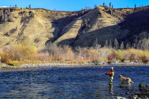 Shop CBD For Dogs And Cats Boise Fly Fishing