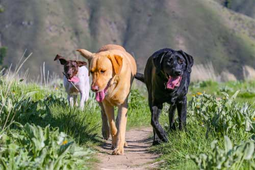 Shop CBD For Dogs And Cats Boise Idaho Hills
