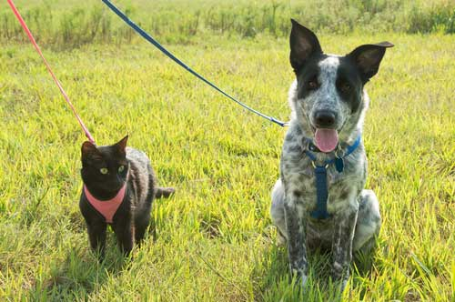 Shop CBD For Dogs And Cats Houston Dog Park
