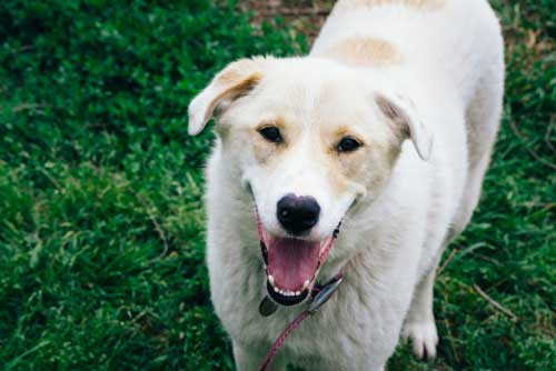 Shop CBD For Dogs And Cats Tulsa Dog Parks