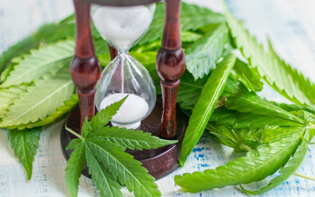 How Long Does CBD Oil Last in Your System?