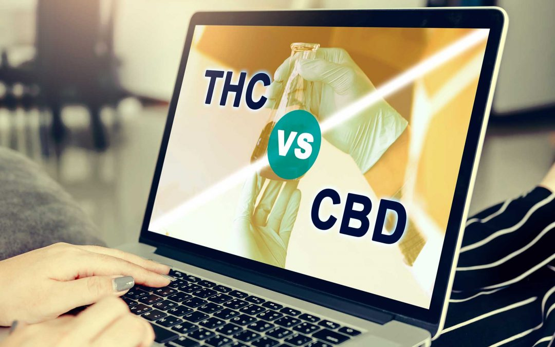CBD VS THC: What You Need To Know