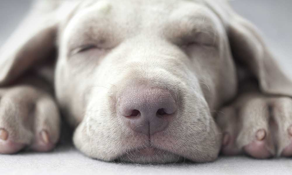 How Do I Stop My Dog From Snoring?