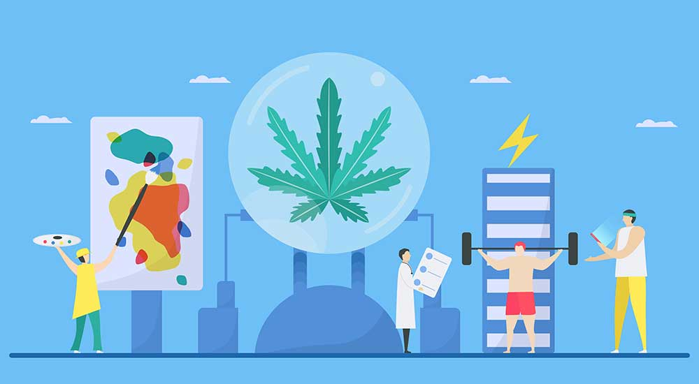 What Are The Functions Of Cannabinoids And How Do They Work