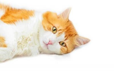 Let the Fur Fly: The Great Debate on CBD for Cats, and Why It's Exactly What Your Feline Needs