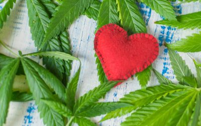 CBD 101: Does CBD Oil Have Side Effects?
