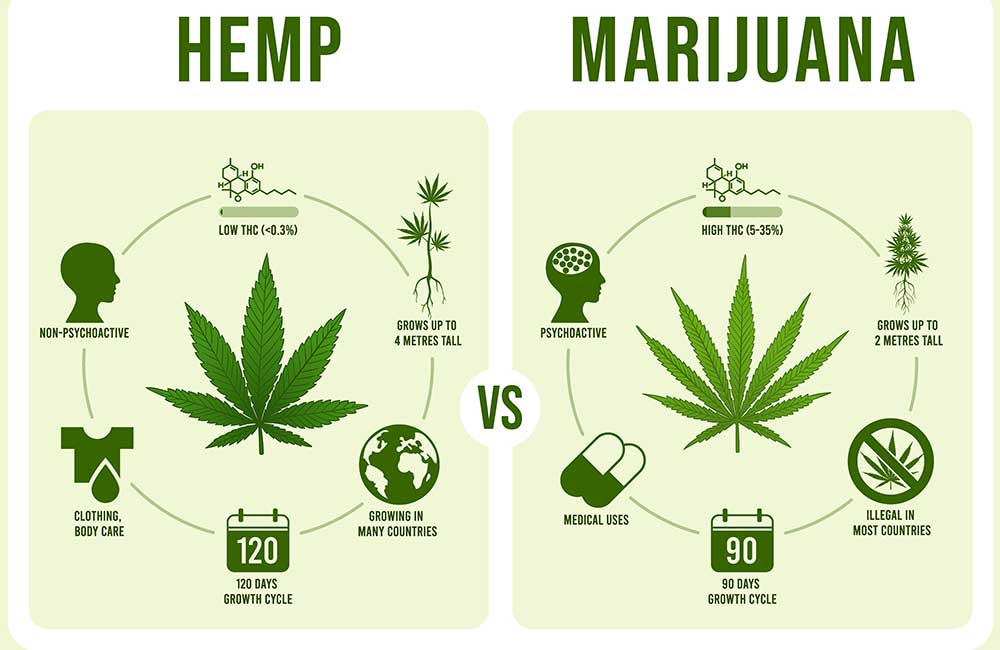 Is Hemp Weed & Vice Versa?