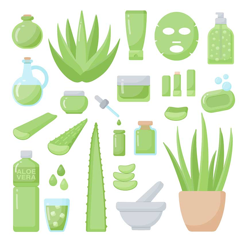 Many Ways To Benefit From Aloe Leaf Juice