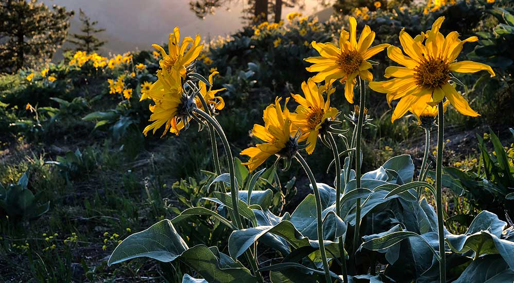 Be a safe, natural alternative to painkillers